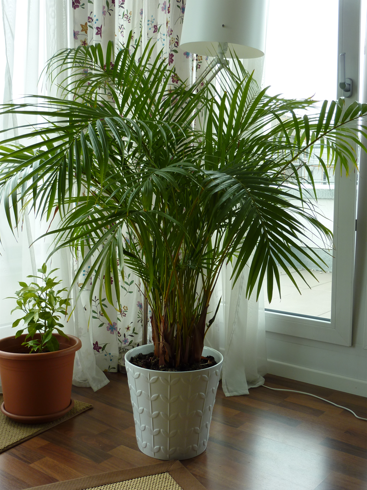 1000 Images About Houseplants On Pinterest
