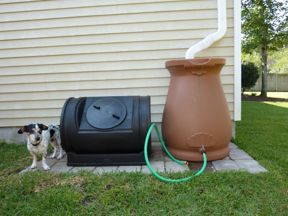 Buster Composts Rain Water