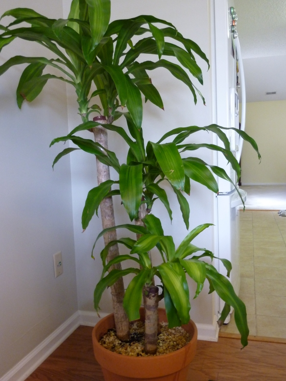 repotted plant