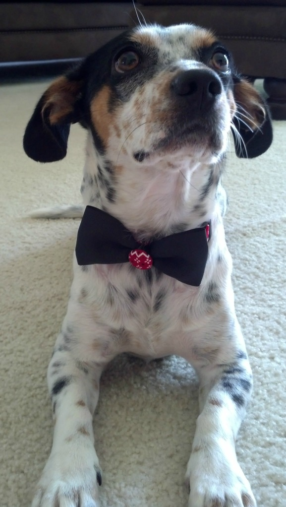 Buster in bowtie